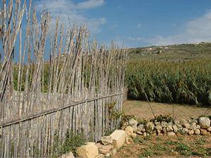 Xaghra (Gozo)